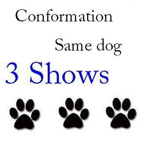 Conformation Same Dog 3 Shows - $85 103