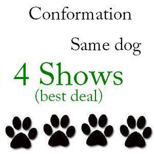 Conformation Same Dog 4 Shows - $113 104