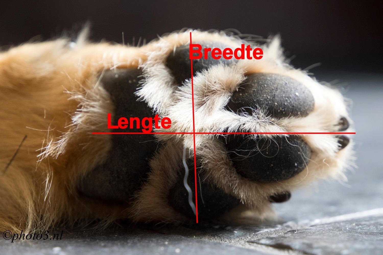 Breedte en Lengte voet