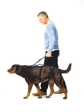 Walking Leash als looplijn