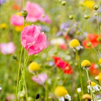wild flower meadow turf