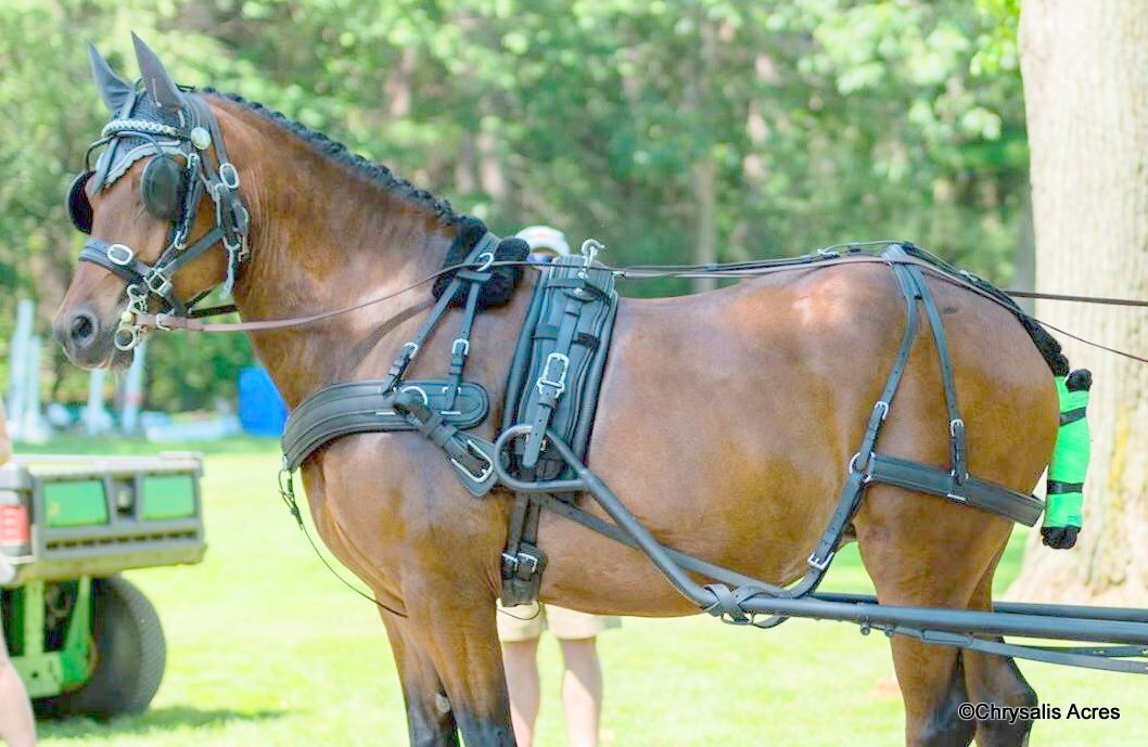 Chrysalis Acres – Equipment for the Carriage Driving Horse