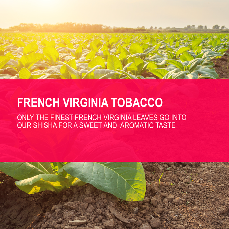 Hookafina Virginia Tobacco