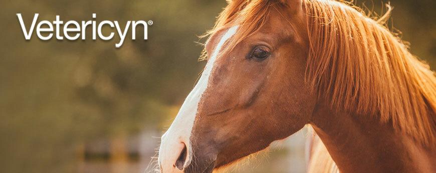 Vetericyn voor Paarden