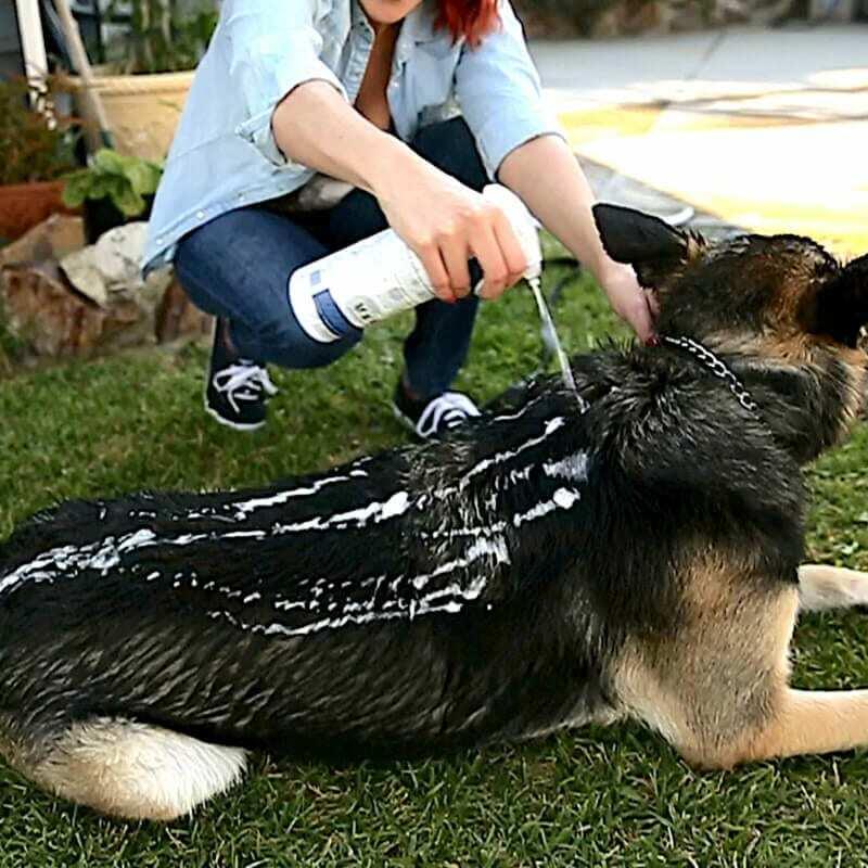 hond wassen met vetericyn foamcare shampoo