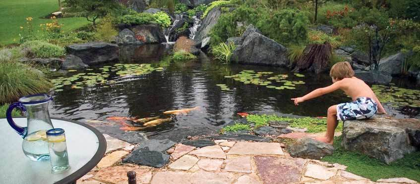 Aquascape Pond And Pondless Waterfall Kits