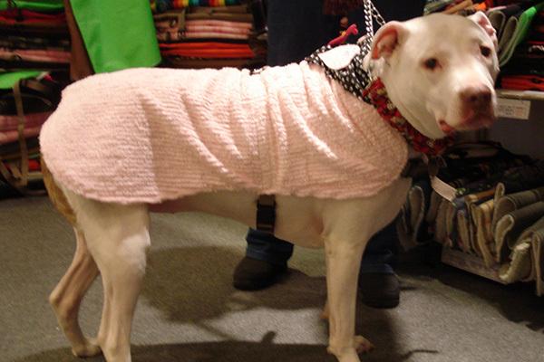 cooling medical dog apparel