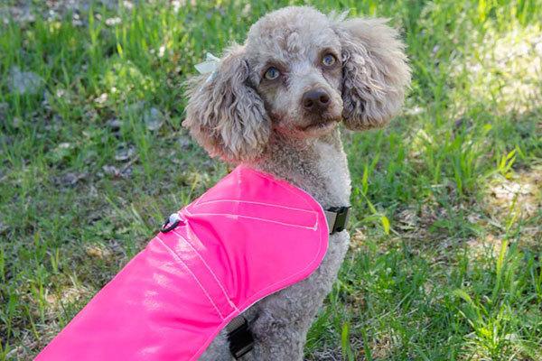 dog rain jackets