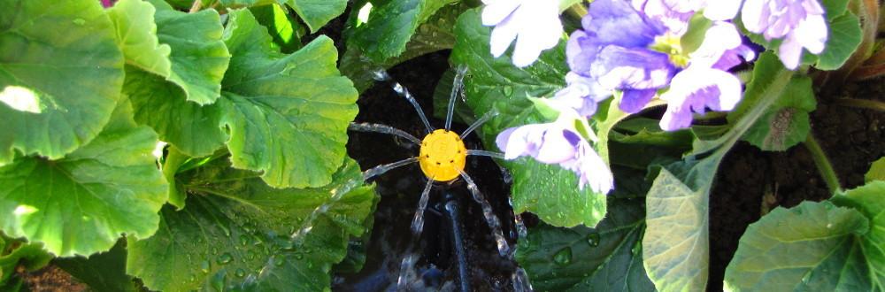 Irrigaweb - L\'Irrigazione a Roma - Irrigazione a Goccia