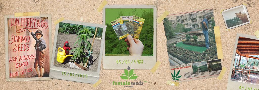 Купить семена каннабиса Female Seeds в Toro Growshop