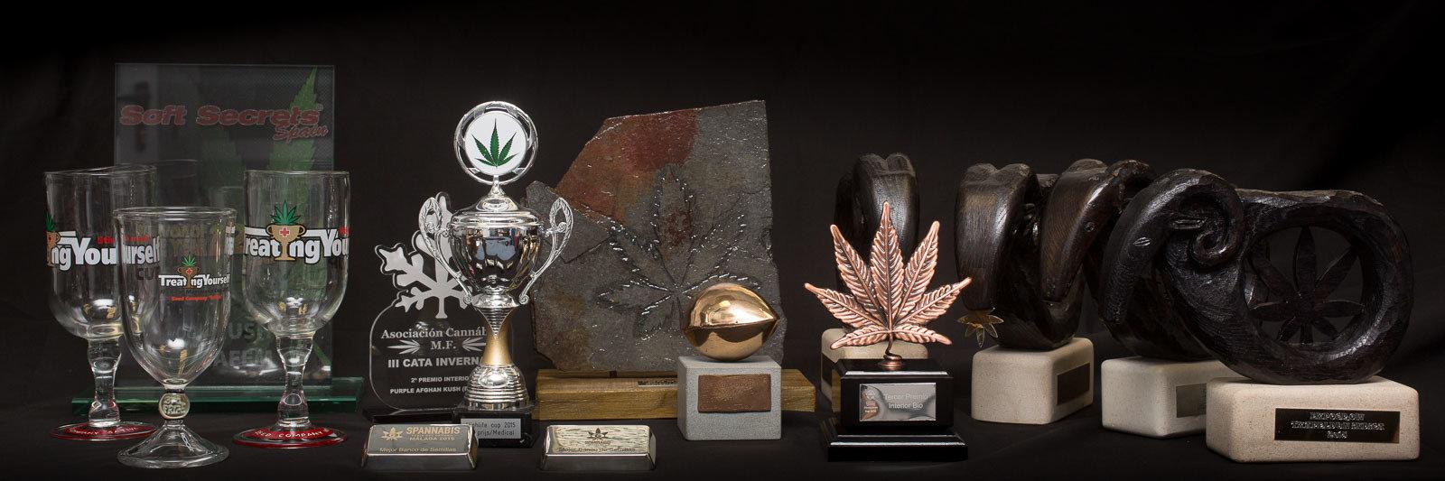 Купить сортовые семена марихуаны сортов чемпионов