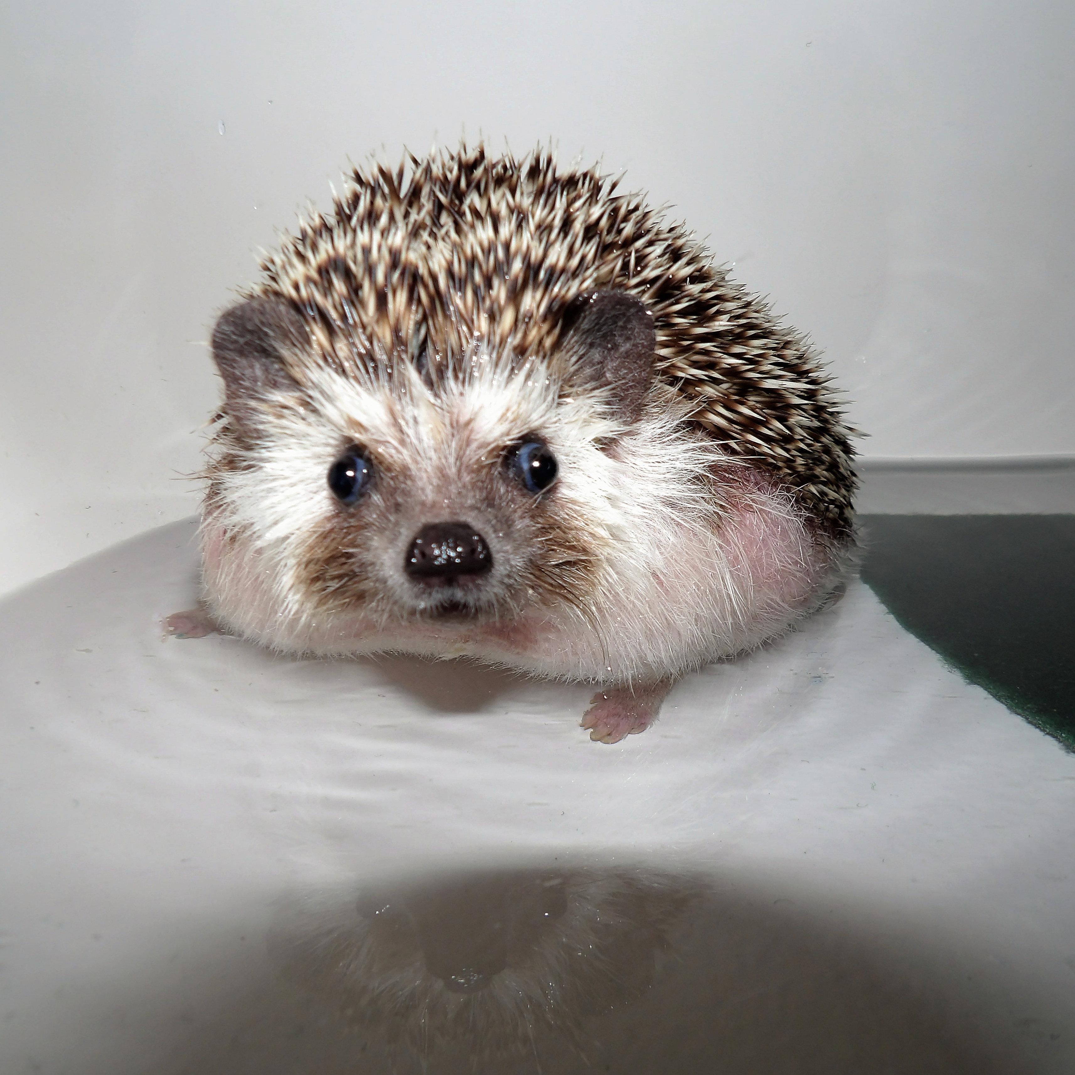 Maxwell in the Bathtub