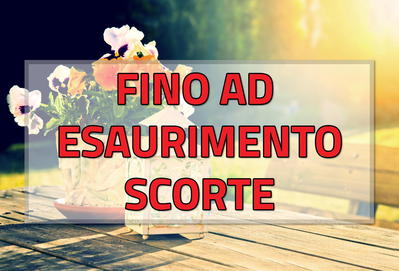 FINOA1_jpg_jpg
