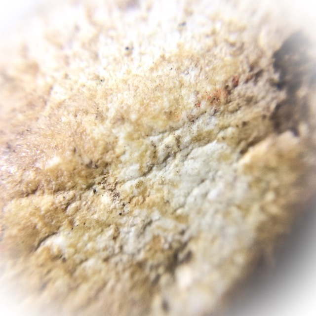 Macro closeup of Muan Sarn Sacred Powders of amulet (rear face)