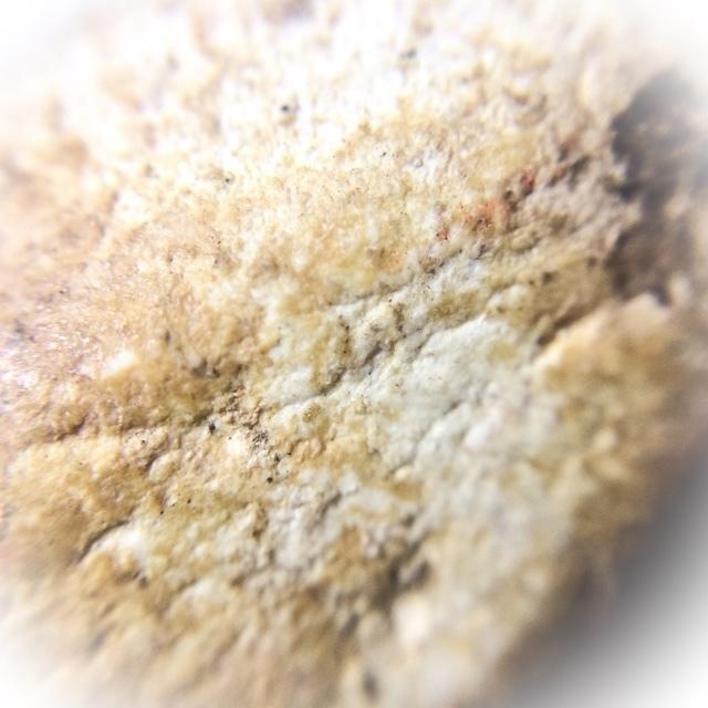 Macro closeup of Muan Sarn Sacred Powders of amulet (rear face)