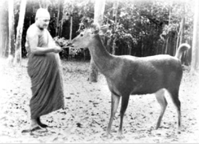 Luang Phu Chah Wat Nong Pha Pong