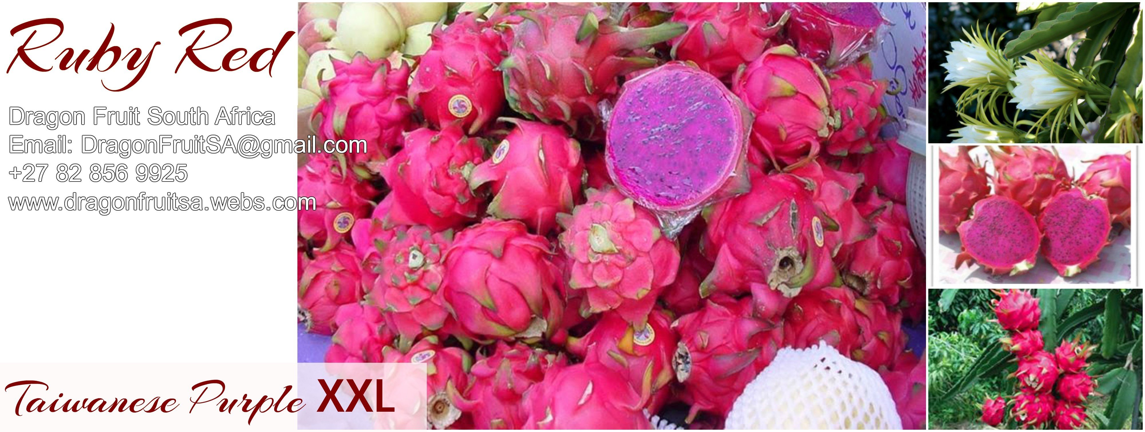 Red Dragon Fruit Pictures