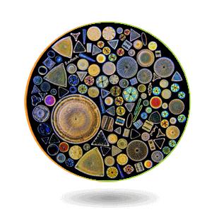 Nualgi Ponds Diatoms