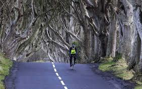 The Road beneath the Dark Hedges