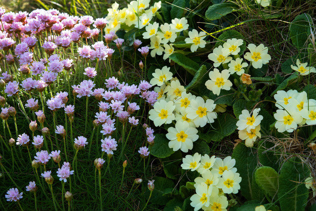 Flora in Ireland