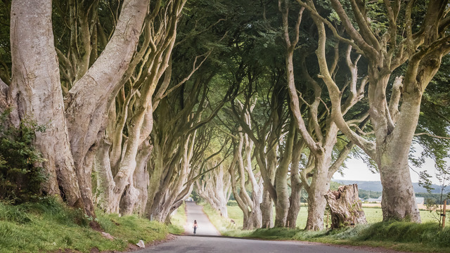 Dark Hedges, Game of Thrones. Ireland