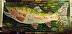 DSCF5901 Amazing Big Fish by loretta rolison