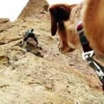 Outdoor Dog Rock Climber