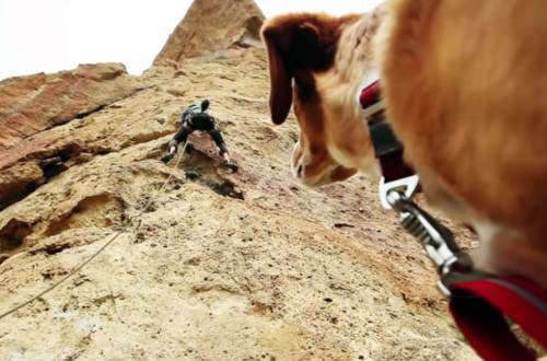 Outdoor Dog Rock Climber