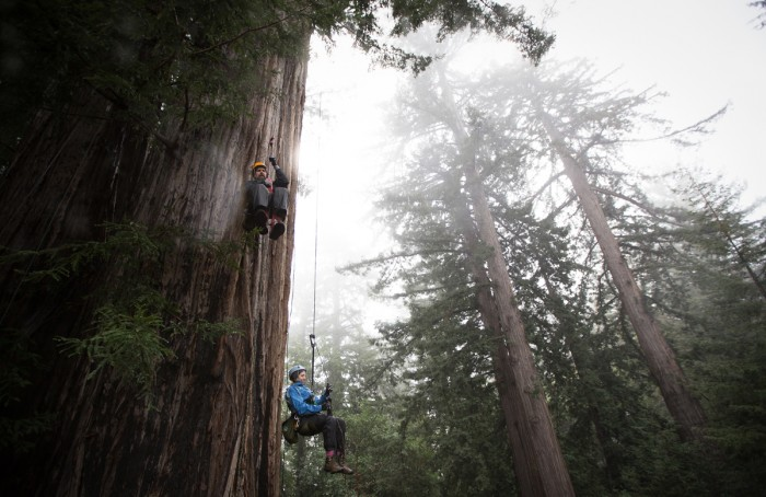 Climbing To Redwood Canopy
