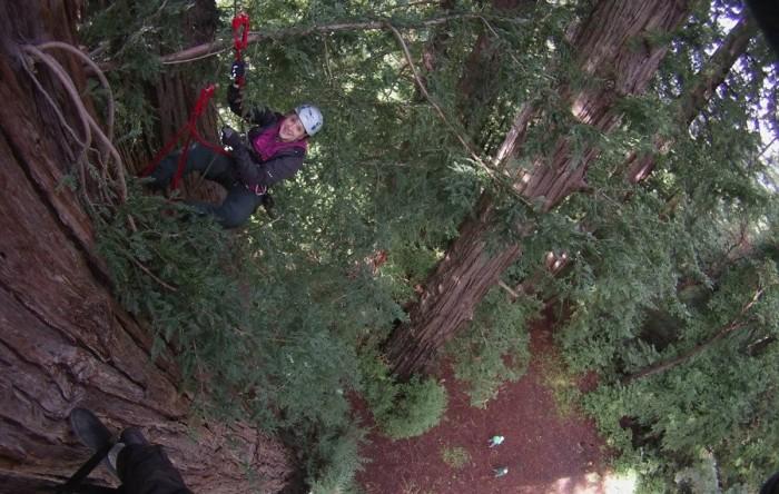 Redwood Climb