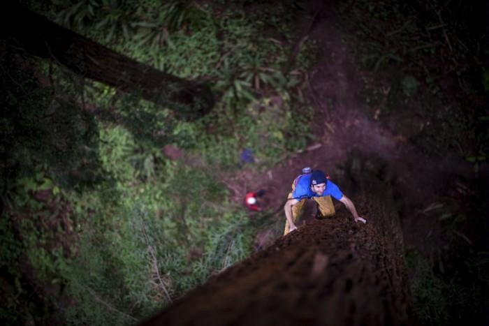 Sharma redwood