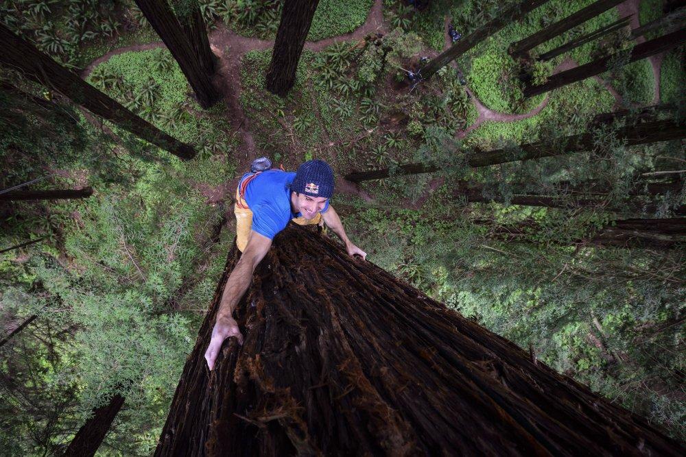sharma climbing tree