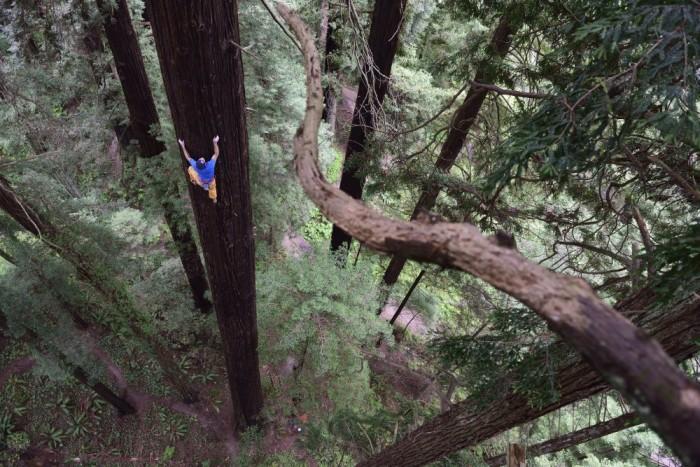 huge tree climb