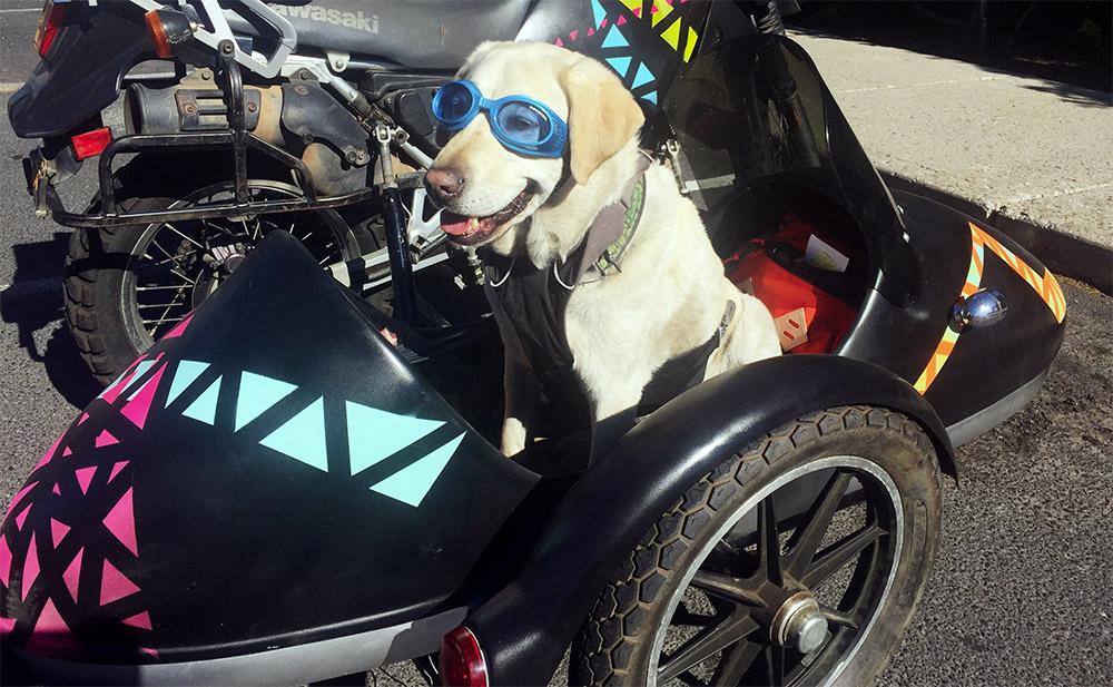moto-dog