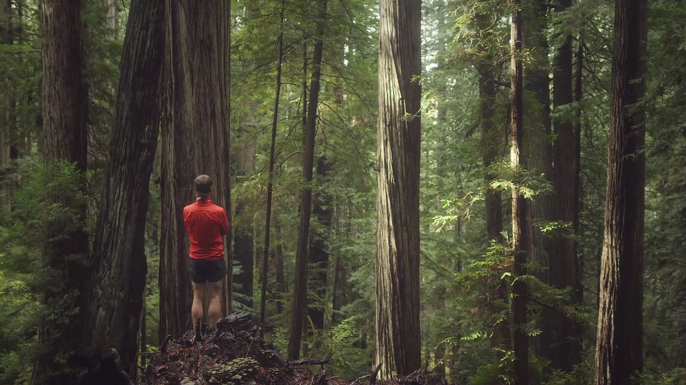 Running Through A Redwood Forest