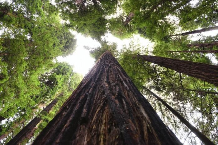 tree climb route