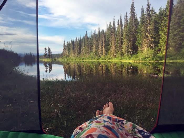 Moto Dog Camping