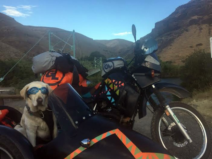 dog and bike
