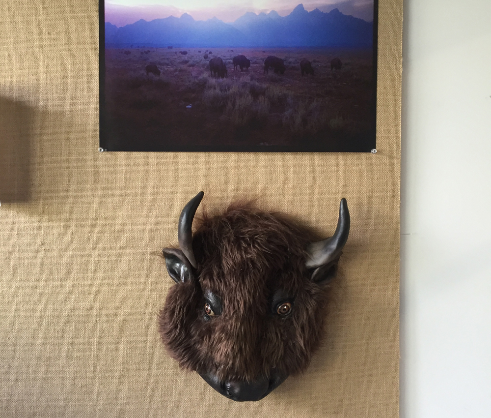 Bison-Head-at-Mountain-Khakis-Office