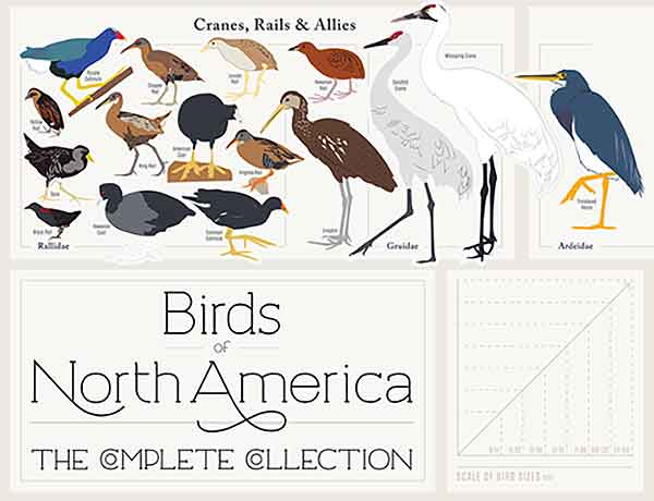 birds-of-north-america