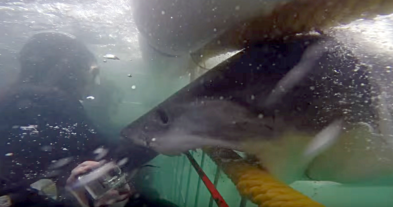 Close Call Cage Diving With A Great White Shark
