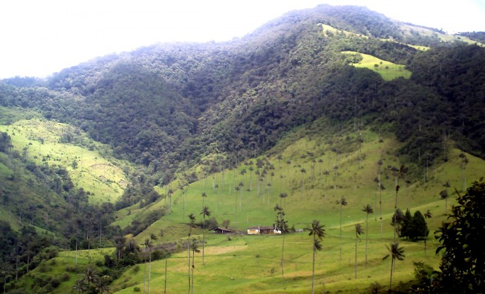 Cocora_valley