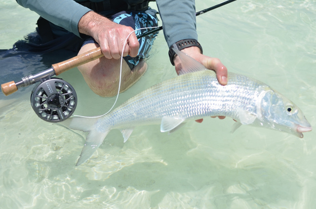 bonefish fly