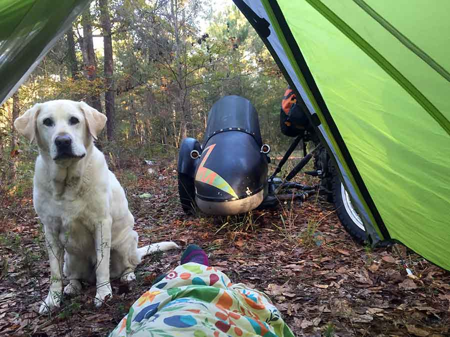 dog-in-tent