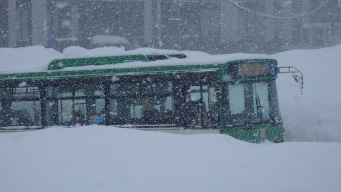Hokkaido bus
