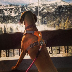 Ruffwear Front Range Harness and Knot a Leash
