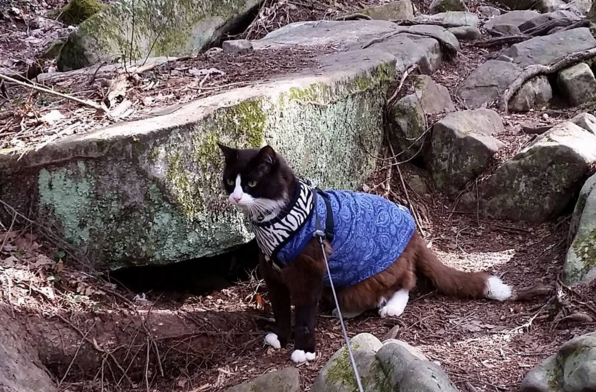 hiking cat 1
