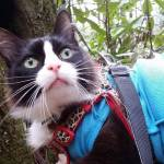 hiking with cat