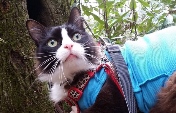 Meet Tuxie, The Cat Who Loves To Hike
