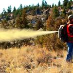 bear spray backpack